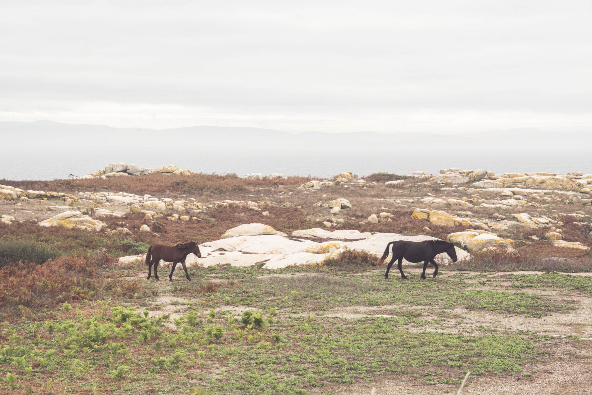 caballos-en-salvora