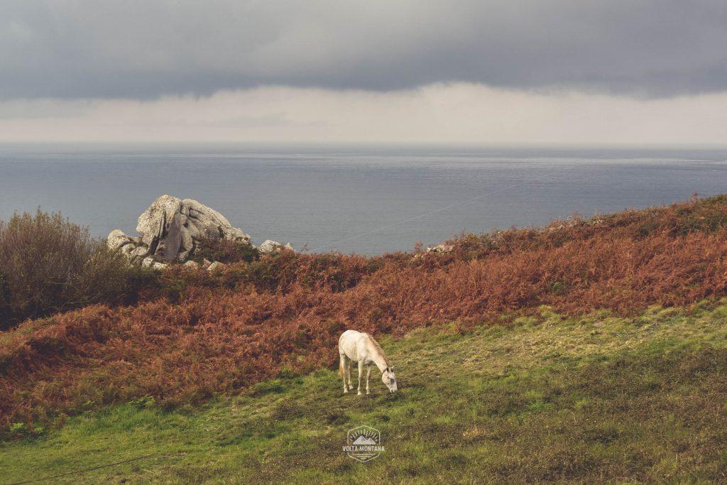 caballo pastando al borde del mar