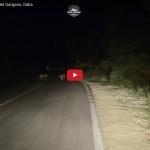 lobos parque nacional gargano