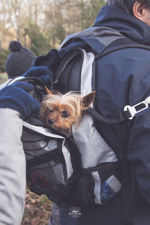 Perro en Castro Candaz