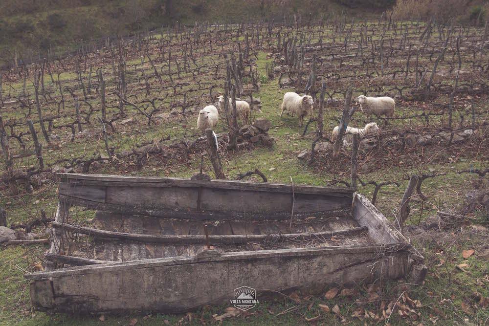 Barca Castro Candaz