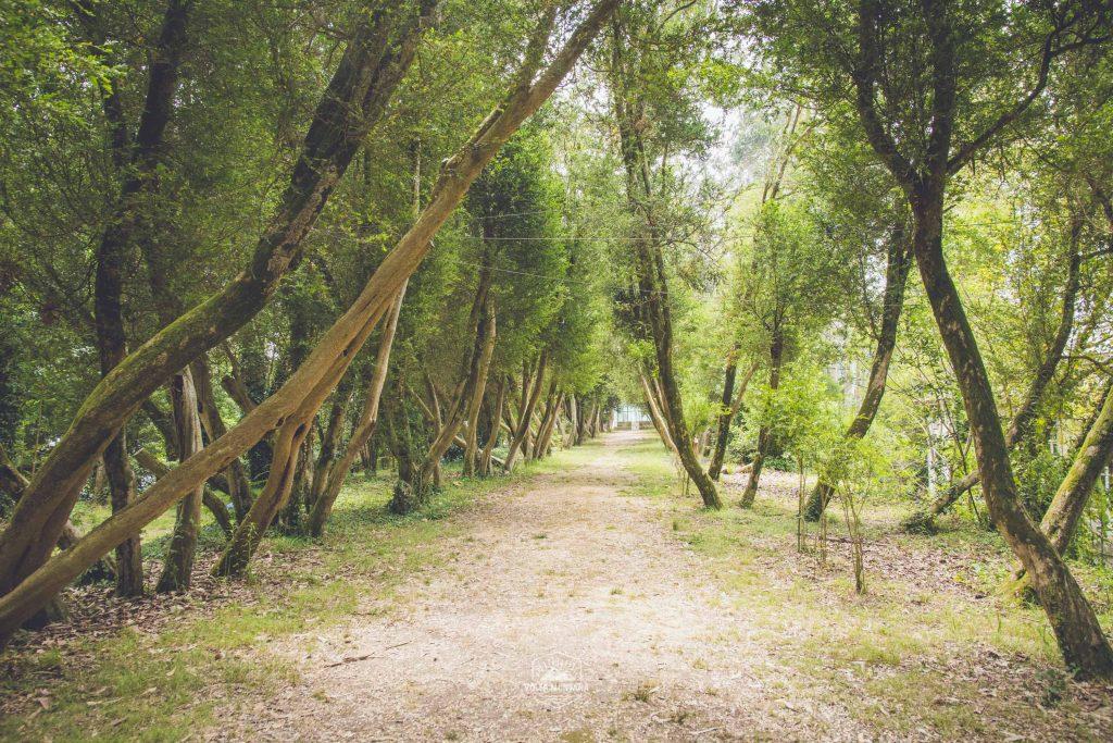 paseo-verde-san-simon