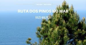 ruta-dos-pinos-no-mar