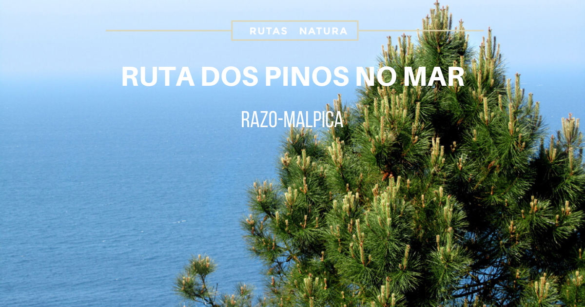 ruta-dos-pinos-no-mar